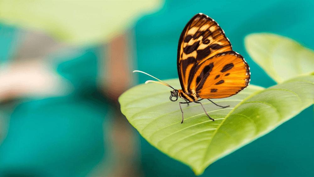 Amazon Wildlife Premium 4k theme for windows 10
