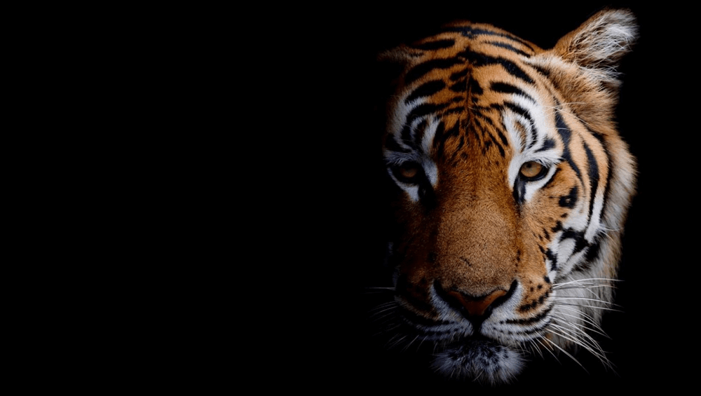 Animal Portraits PREMIUM 4k theme for windows 10