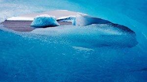 National Geographic Antarctica Premium - Windows 10 4K Theme