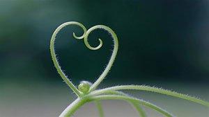 natural hearts premium 4k theme for windows 10